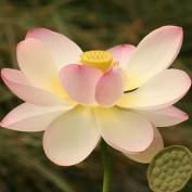 Lotus230 profile image