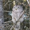 owlperson profile image