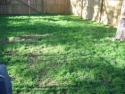 How to grow grass in poor, shaded soil