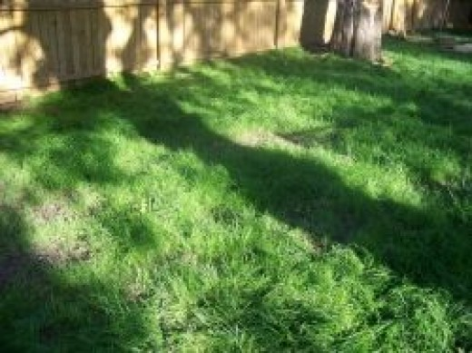 This is our grass now (we still haven't cut it)