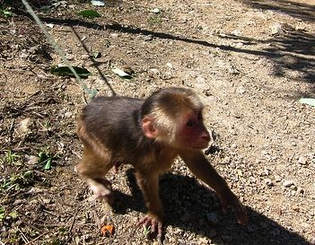 Monkey behind the house