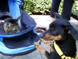 Cats can go places in strollers or harnesses, and dogs can walk on their leashes.