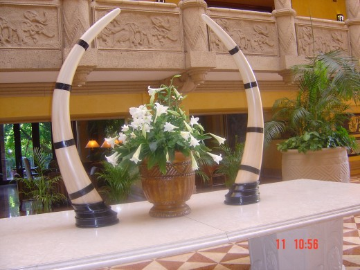 TUSKS OR HORNS USED FOR DESIGN AT THE LOST CITY