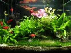 How To Keep Live Aquarium Plants
