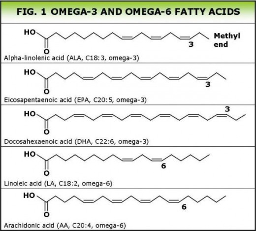 Structure of Omega fatty acids