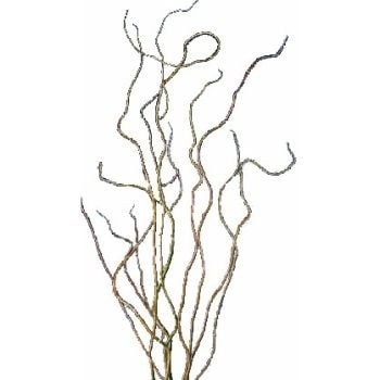 Curly Willow. Take a close look at many tall centrpieces and you'll see that a lot of the height comes from the use of this inexpensive filler. No colour, but still useful.