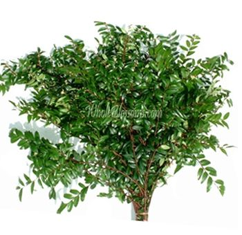 A fairly standard green filler, but green really does help to show off the color of your flowers.