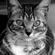 ourcatsplace profile image