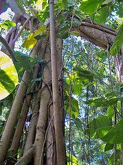 Beanstalk Tree