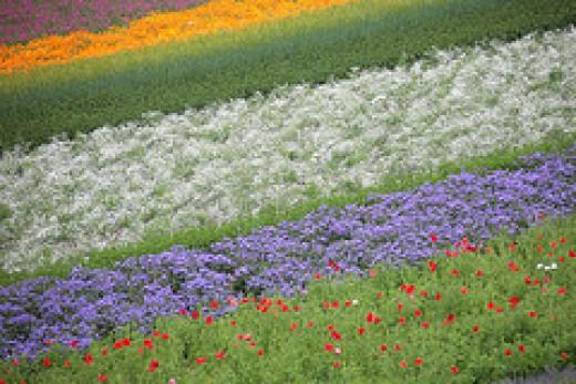 Rainbow Garden by nakae