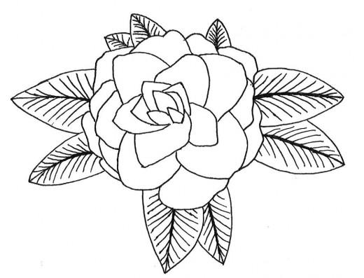 Camellia: Alabama's State Flower