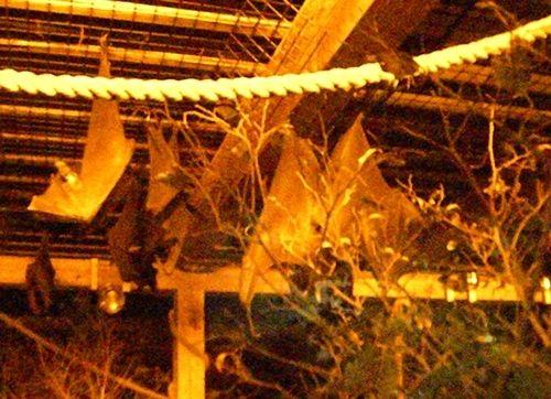Bats at the Columbus Zoo