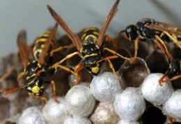 Natural Way To Kill Wasps In House