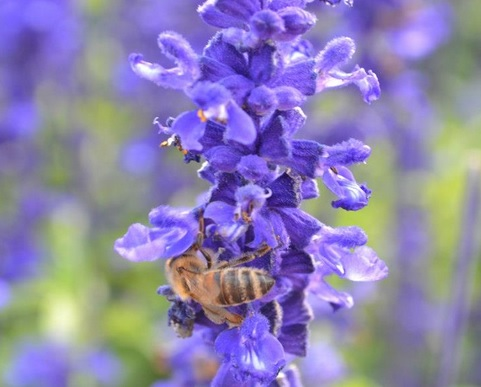 The royal jelly of bees and certain teas is a healing remedy for many ailments.