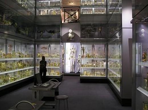 Interior of the Hunterian Museum