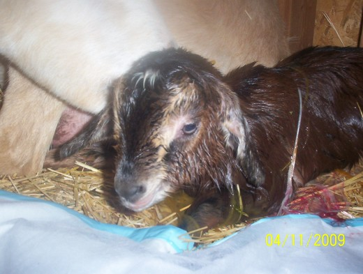 Josie just born