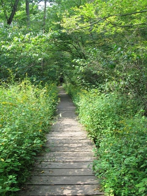 The Boardwalk along Trail 2.