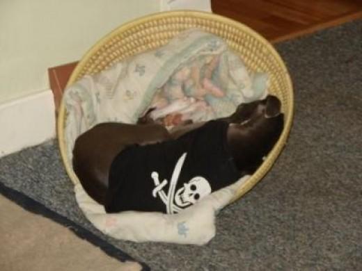 Zephyr in a basket 2