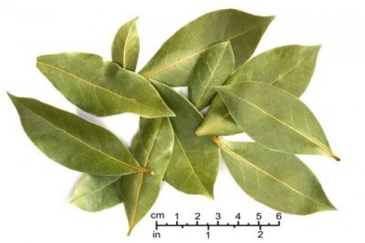 Bay Leaves are a culinary herb often used to flavor soups, stews, and gumbos.