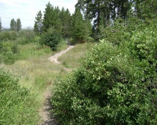 Cranbrook, B.C. hiking trail.