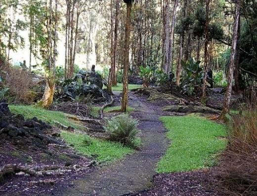 Trek Around the Lava Tree Loop Trail
