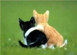 I love you bud!  How about a hug.