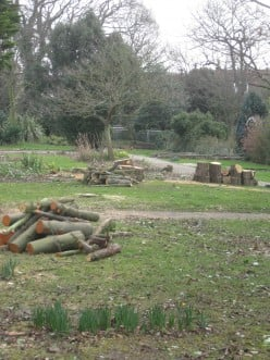 Whitstable loss: the destruction of the Castle Grounds