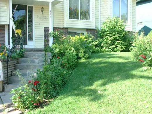 I lined my stairs and the front of my house with hosta and other perennials.