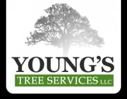 Kalamazoo tree removal