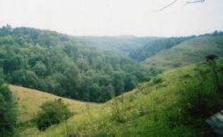 West Virginia Hollow
