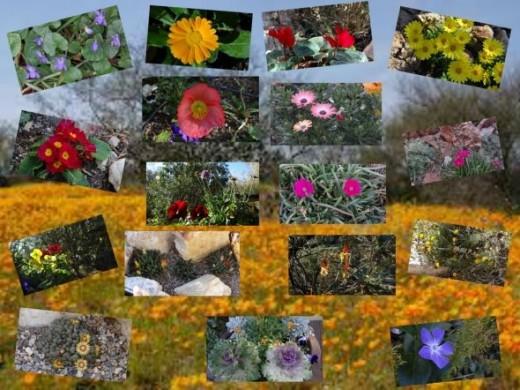 Desert Flowers Collage