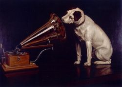 dog listening to musc