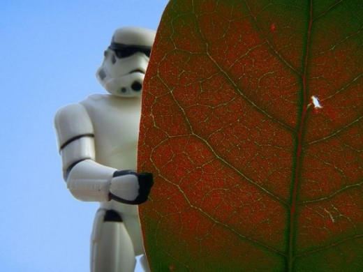 Leaf Stormtrooper