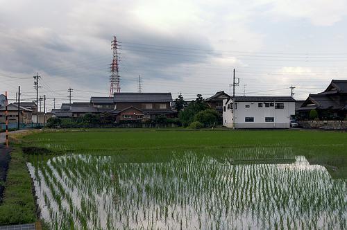 Urban Rice Paddy