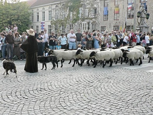moving sheep from one pasture to another