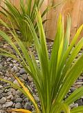 Urban Flax (linen)