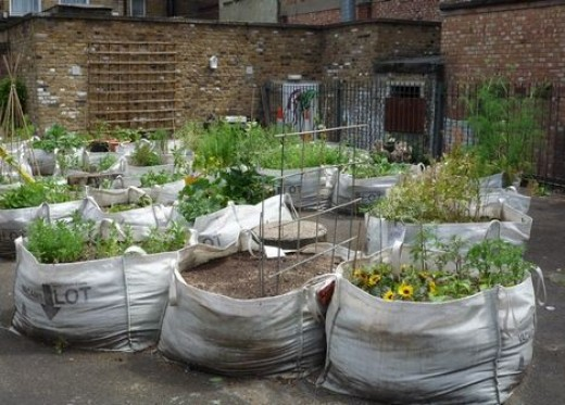 how to turn a vacant lot into a garden