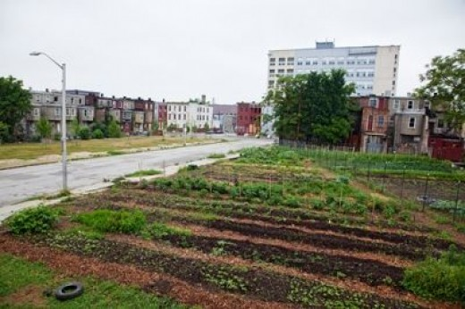 downtown farm (this one is in Baltimore)