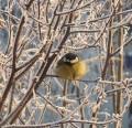 Winter Bird Feeding Tips: Bird Feeders, Shelter and Drinking Water