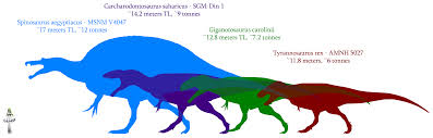 Relative sizes of some of the dinosaur predators.  As you can see, they were BIG.