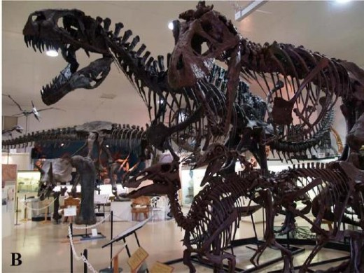 Dinosaur skeletons: almost as awesome as real dinosaurs.
