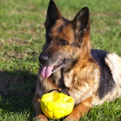 Most Durable Dog Toys
