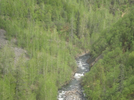 A View from the Train - Denali to Ankorage