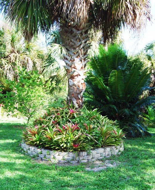Neos around a palm tree after being planted for three years.