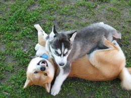 Bad Dog - Dealing with Bad Dog Behavior.