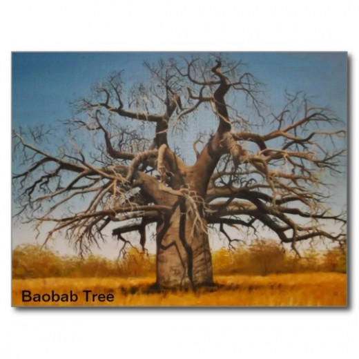 Wrapped Canvas Baobab tree