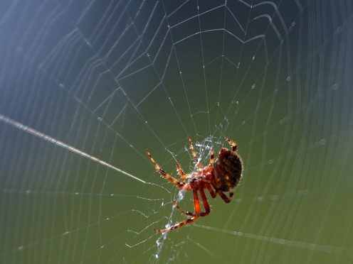 The most common method of trapping prey for a spider; the web.