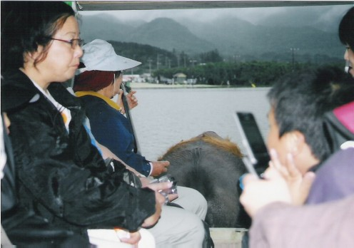 Looking past fellow tourists across a water buffalo's back towards Iriomotes's mountains.