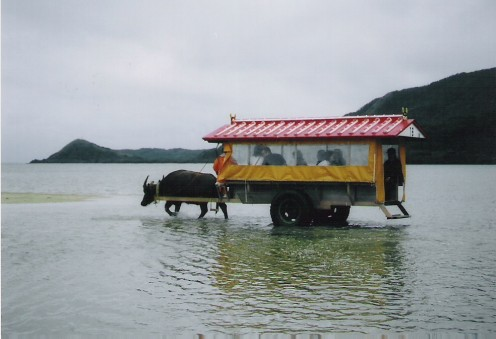 Buffalo-driven carts to Yufu Island.