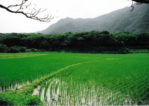 Rice fields and granite mountains. A scene from Route 79 along Ishigaki's north shore.